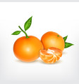 ripe tangerine with slice vector image vector image