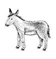 cute hand drawn baby donkey vector image