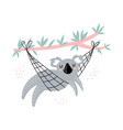 cute koala is resting in a hammock isolated vector image vector image