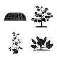 design of greenhouse and plant icon set of vector image