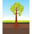 Aple tree with horse vector image vector image