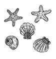 Aquatic fauna drawing vector image vector image