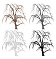 old tree willow color black and white vector image