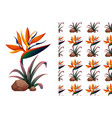 seamless background design with bird paradise vector image