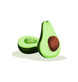 two halves of fresh green avocado with bone vector image