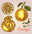 collection of highly detailed hand drawn orange vector image vector image