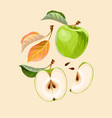 set apple fruits and leaves vector image