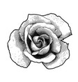 single rose flower vector image
