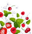 Splash of Berries Cherries and Lime vector image vector image