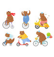 cartoon biked bear bears on children tricycle vector image