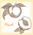 detailed hand drawn fruit peach in vector image vector image