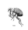 hand drawn flea vector image vector image