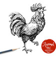 Hand drawn rooster Sketch chicken isolated on vector image