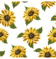 seamless pattern with sunflowers on a white vector image vector image