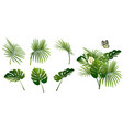 set branches tropical plants vector image