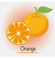 orange fruits and vegetables vector image