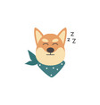 cartoon shiba inu dog sleeping isolated on white vector image vector image