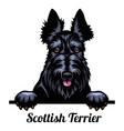 head scottish terrier - dog breed color image vector image vector image