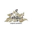organic symbol healthy product coffee tree vector image