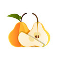 pear one and a half yellow pear fruit isolated on vector image