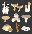 eatable thai mushroom in flat style vector image vector image