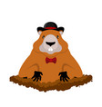 groundhog day marmot in hat rodent aristocrat for vector image