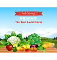 Poster design with fresh fruits and vegetables vector image