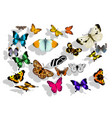 set of butterflys vector image vector image