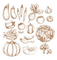 sketch farm vegetables isolated icons set vector image vector image