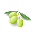 green olives with leaves on branch icon vegetable vector image vector image