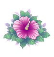 hand drawn floral composition with pink hibiscus vector image