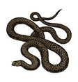 python in vintage style on a black background vector image vector image