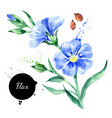 watercolor hand drawn flax flower painted sketch vector image vector image