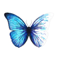 Butterfly Morpho Anaxibia vector image vector image