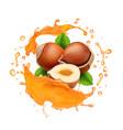 caramel or honey splash and hazelnut realistic vector image vector image