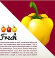 Infographic with fresh capsicum vector image