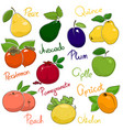 juicy ripe fruits vector image vector image