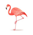 red and pink flamingo cool vector image vector image