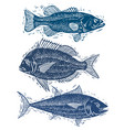 set of fishes different underwater species vector image vector image