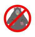 stop rat ban big mouse rodent prohibitive sign vector image