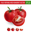 tomatoes on white background vector image