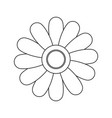 daisy flower decoration natural flora vector image vector image