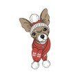 dog in hat and scarf vector image