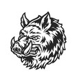vintage angry wild boar head