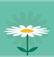 white daisy chamomile cute growing flower plant vector image vector image