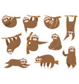 cute cartoon sloths adorable rainforest animals vector image