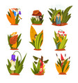 cute little people in tall grass set funny fairy vector image