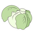 head of cabbage vector image vector image