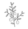 tiny lemon tree branch with lemons black outline vector image