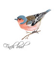 finch bird vector image